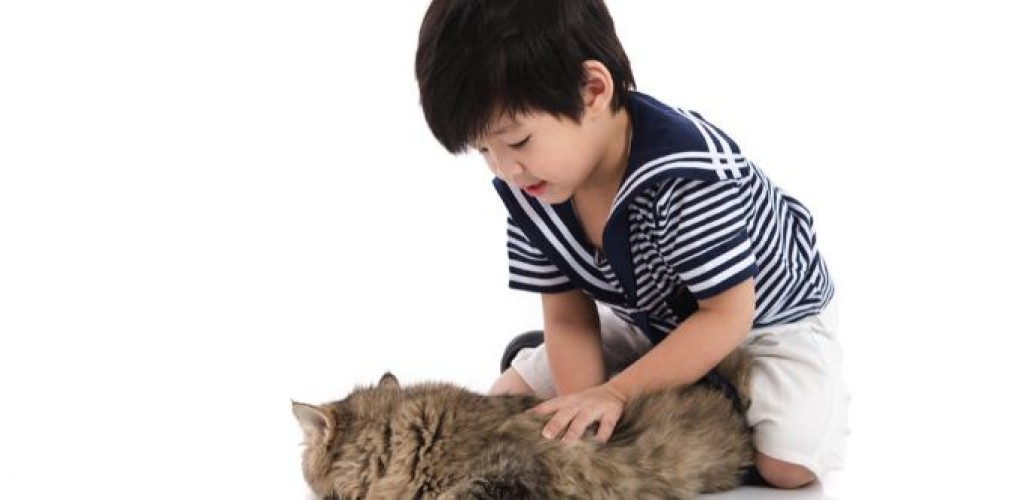 Which would you get as a first pet for your child?
